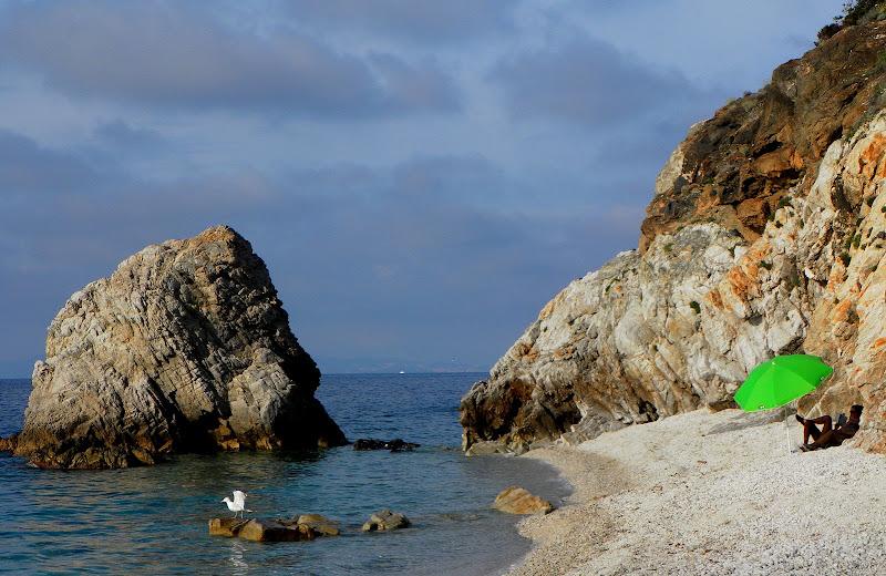 Un angolo di spiaggia di ellimo