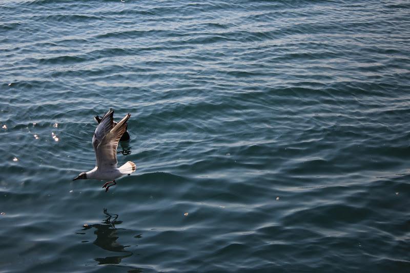Volo a pelo d'acqua di LB foto