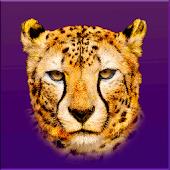 Las Vegas Cheetahs