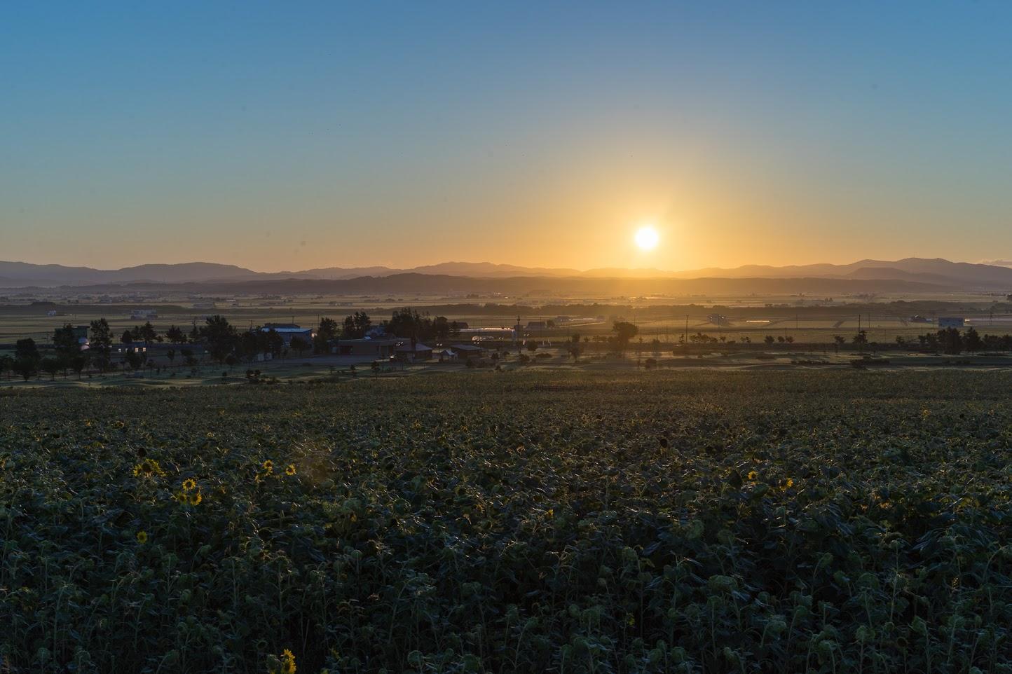 ひまわりの里の夕陽