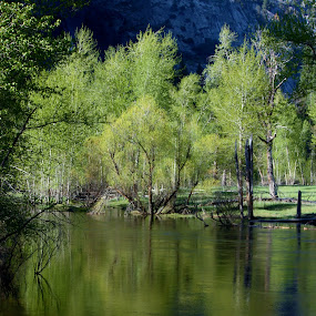 River Reflection by Karen Coston - Novices Only Flowers & Plants ( reflection, riverside, yosemite, treescape, spring,  )