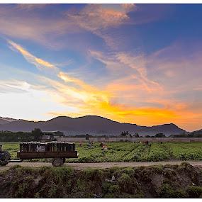 Farmer In The Farm 2016 by Coolvin Tan - Landscapes Sunsets & Sunrises ( famer, mountain, sunrise )