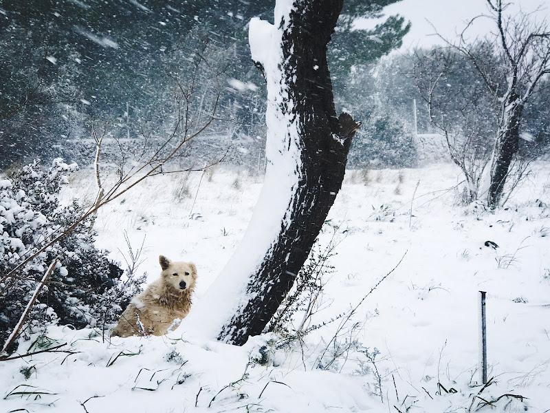 snowdog di GIACINTUS