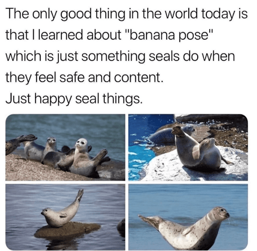 Memes to Cure Your Boredom for a Little While