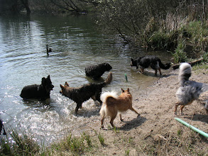 Photo: Met Otis, Boy, Luna, Tyri, Amigo