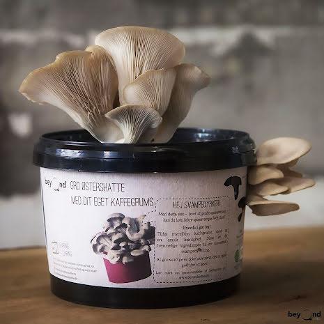 SVAMPLÅDAN! Odla svamp med din kaffesump