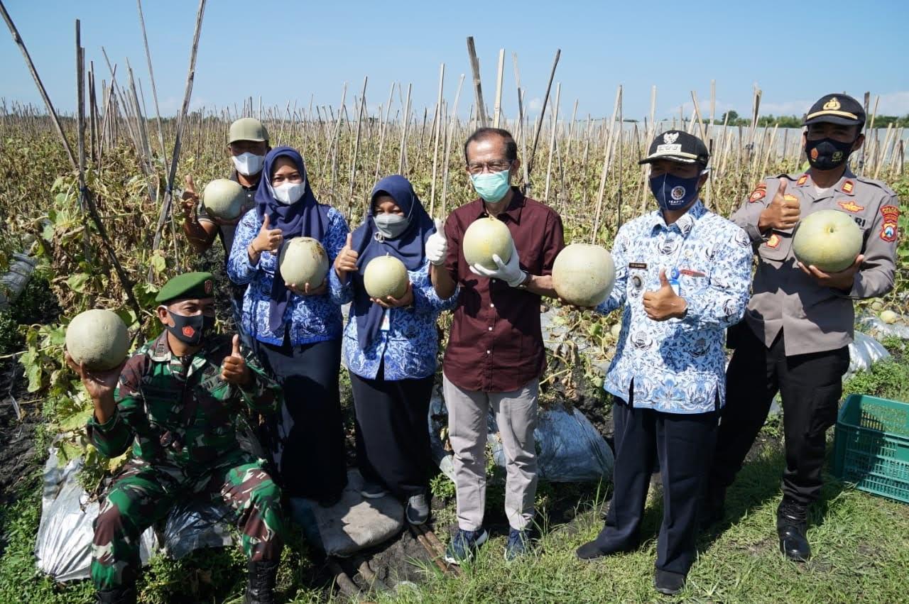 Panen Raya Melon Desa Klagen