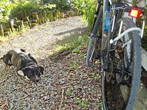 Photo: Angel plotting to stow away on Patrick's bike