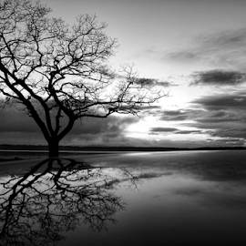 Reflections  by Todd Reynolds - Black & White Landscapes