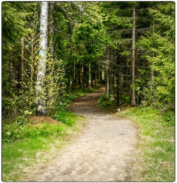 "Photo: ""The Path"" - Langhus"