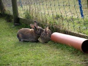 Photo: Binky & Bunny