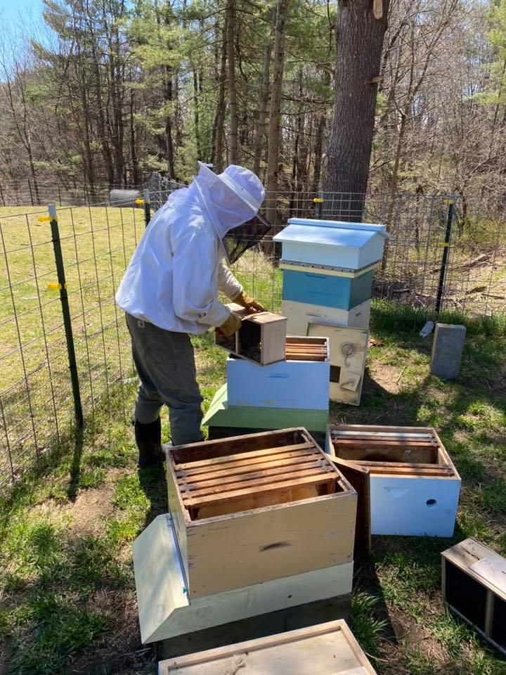 New Bee Hive Work