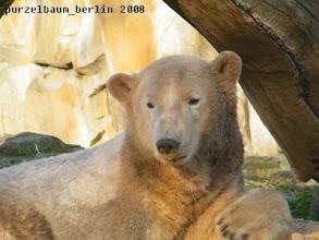 Photo: Knut mit Sandschnute ;-)