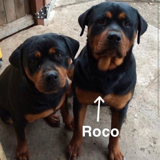 Roco, MISSING Feb 20, 2020