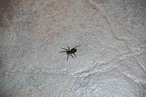 phobie araignée arachnophobie hypnose Eaubonne Val d'Oise