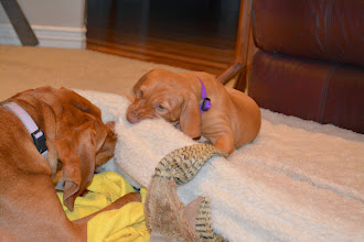 Photo: Dog bed play