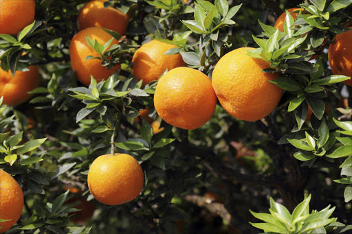 The citrus industry is SA's largest employer of unskilled labour. Picture: THINKSTOCK