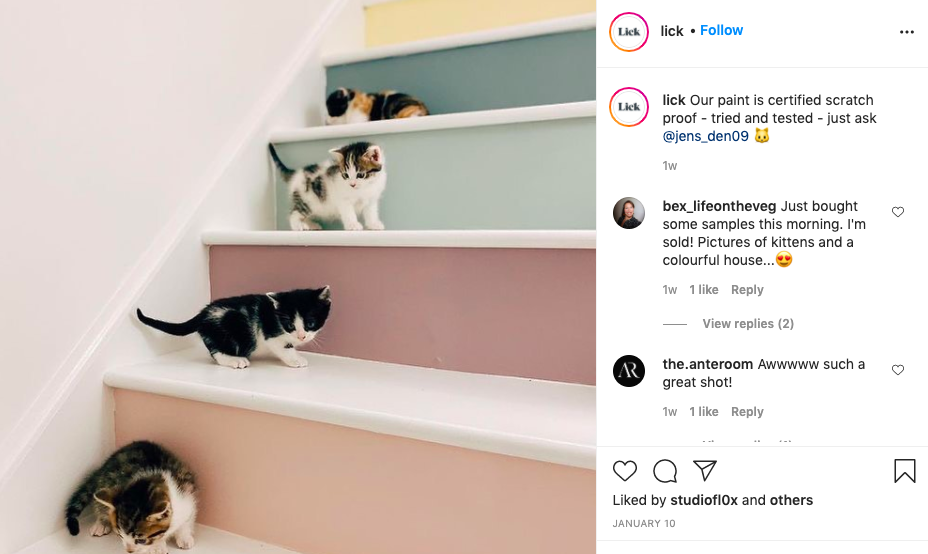 Lick paint - cute kittens on stairs