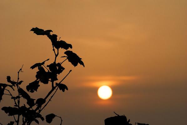 Vite al tramonto di Marta