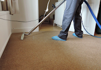 A carpet being cleaned through hot water extraction
