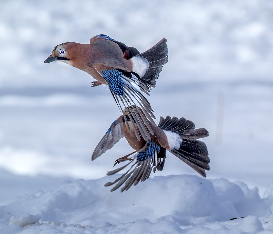 by Stanley P. - Animals Birds (  )