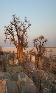 Botswana Wallpapers Travel - náhled
