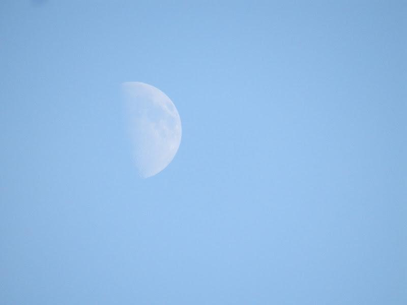 Luna di giorno di zolaclara
