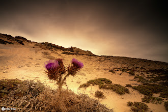Photo: Desert Flower  No matter how adverse the conditions colour and beauty will come through to show there is always a way.
