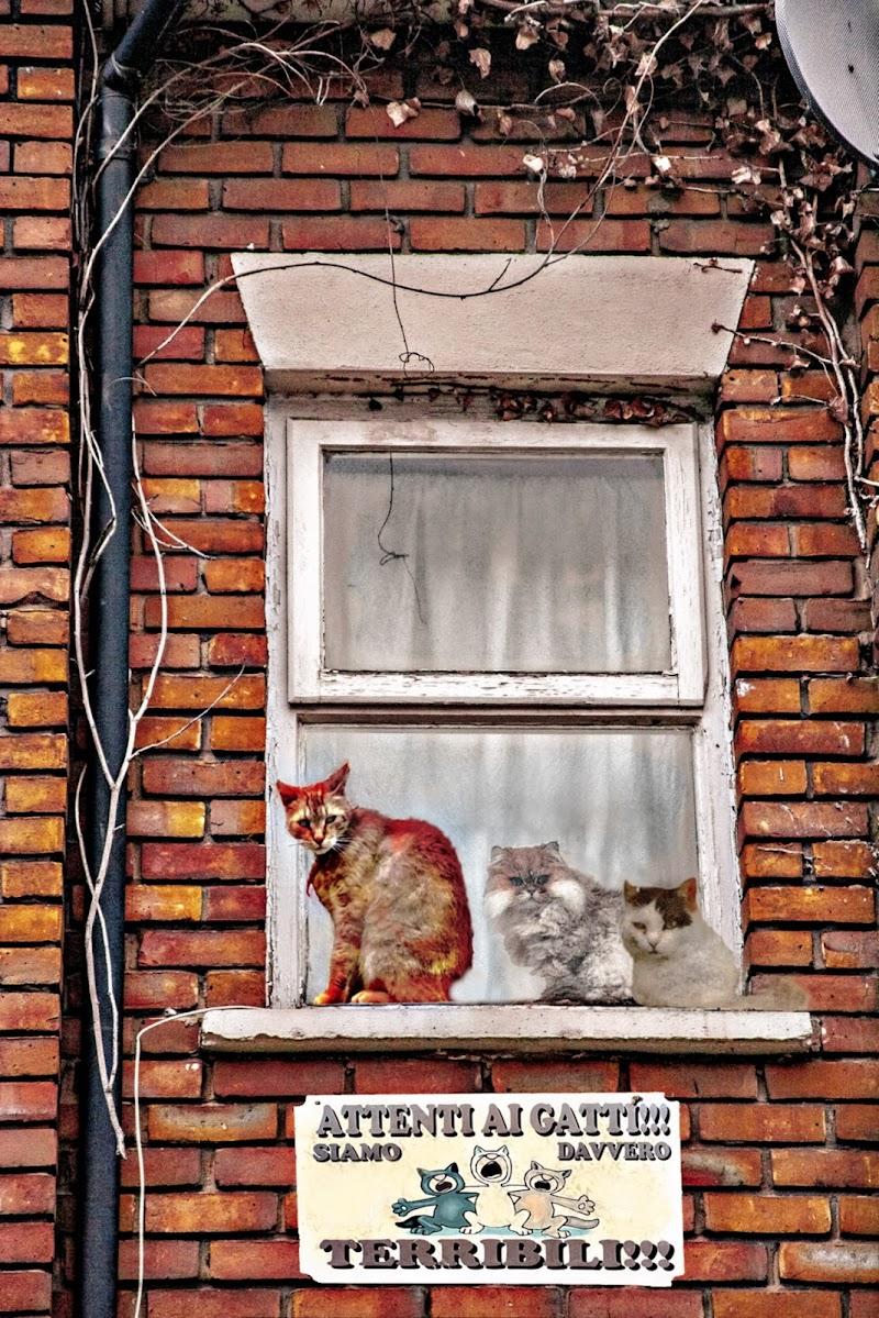 Attenti ai Gatti. di D. Costantini