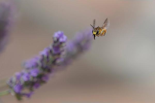è tempo di produrre miele.... di Rickytre