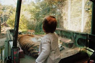 Photo: tigrisles