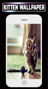 Cute Kitten Wallpaper DP Cats Pictures Background - náhled