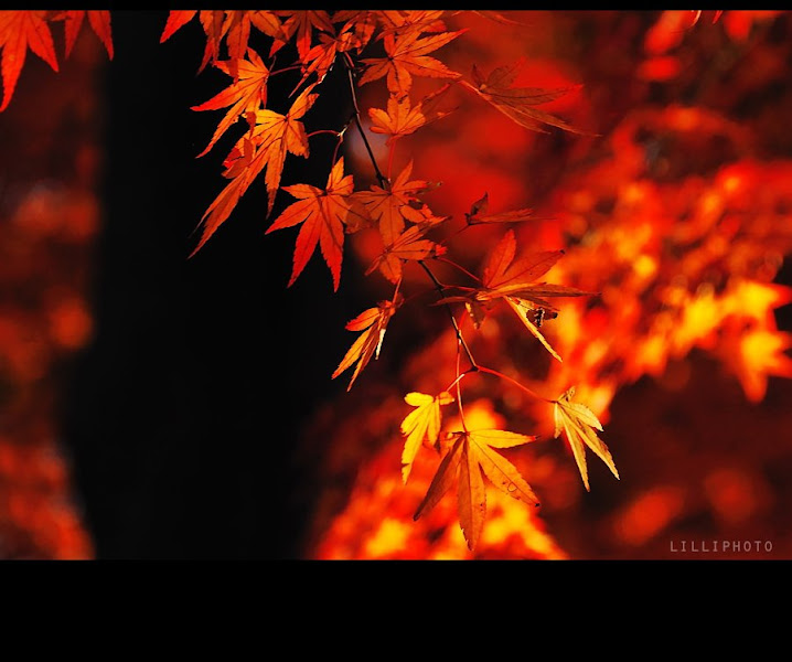 Photo: Autumn is a second spring when every leaf is a flower. ~Albert Camus