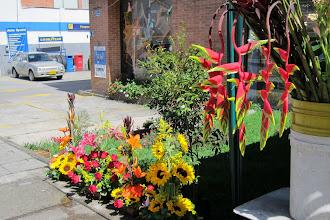 Photo: ALLE blomsterne er levende