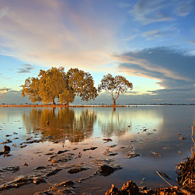 The Forbidden Tree by Hector Quiambao - Landscapes Waterscapes