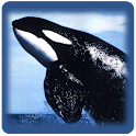 Learn Dolphin and Whale Sounds icon