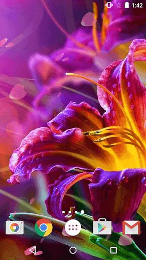 花 ライブ壁紙