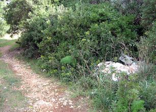 Photo: Abocament de peltret al costat de la carretera de St.Climent a Binidalí