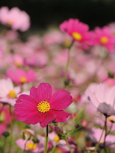 Landscapes of the flower 1.1 Windows u7528 4