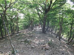 稜線沿いを歩く(左に分岐が)