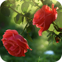Red Rose Flower Live Wallpaper icon
