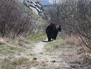 Photo: Black bear at Wildlife Conservation Center
