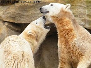 Photo: Na Knut, spielen wir?
