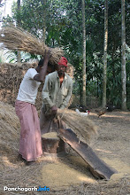 Photo: Farmers threshing paddy, separating paddy from straw