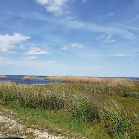 Creole Marsh by Stacey Witherwax - Uncategorized All Uncategorized ( marsh,  )
