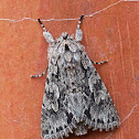 Early Grey Moth