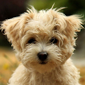 Cute Puppies Live Wallpaper icon