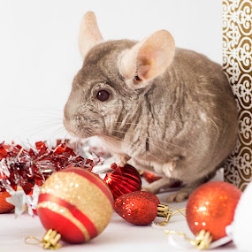 What will I get for Christmass? by Susan Pretorius - Public Holidays Christmas