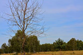 Foto: Oranienbaumer Heide