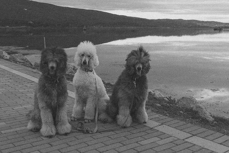 Tre amici .......a passeggio di NadiaBettini
